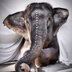 99 потрясающих портретов животных, слон
