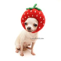 dog S nantlle Cute Cat Costumes, Halloween Costumes, Watermelon Costume, Baby Doll Bed, Designer Dog Clothes, Diy Stuffed Animals, Dog Accessories, Dog Design, Funny Dogs