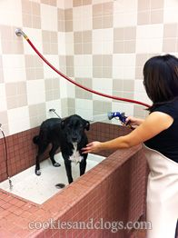 Dog spa design large waist high tubs are great for the saftey tethers for the dog wash solutioingenieria