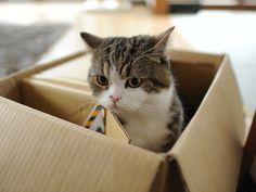 Maru always playin' in boxes
