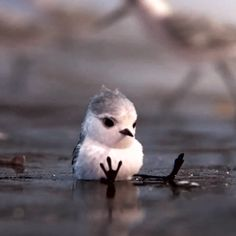 Pixar has shared a couple of seconds of its upcoming short animated film Piper. It's a glorious and heart-warming project. Disney Memes, Disney Pixar, Piper Pixar, Pixar Shorts, Short Films, Disney Fan Art, Animation Film, Small World, Art Pages
