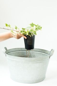 5 Tips for Container Gardening by Carmen Johnston Gardens
