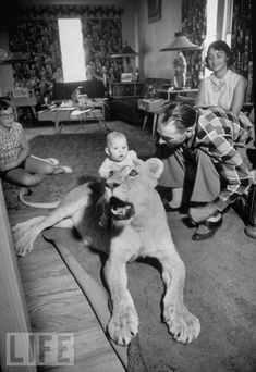I'm assuming this lion is stuffed??? 30 Strange But Delightful Vintage Photos Of Animals