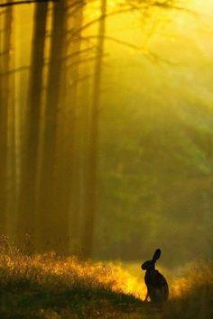 Guardian of the Mist by Jerzy Grzesiak