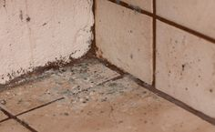 Remove mould from bathroom and kitchen tiles quickly and easily with FUZE MoGo.