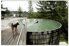 water tank pool @Kellie Dolzynski for the kids