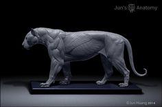 Tiger anatomy model, Jun Huang on ArtStation at https://www.artstation.com/artwork/m1lre