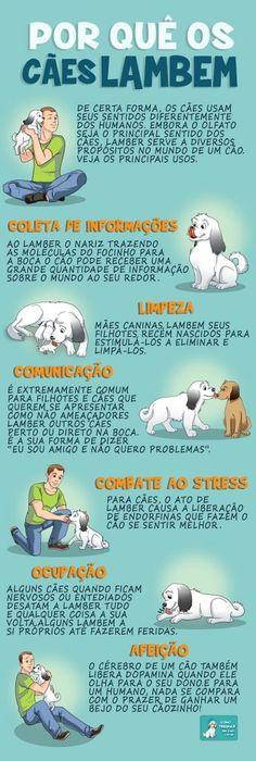 Por quê os cães lambem