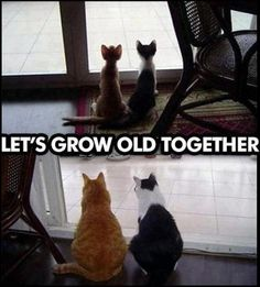 funny cats, growing old together