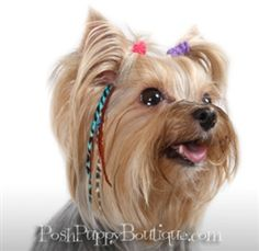 OMG: Dog Pet Feather Hair Extensions - Many Colors