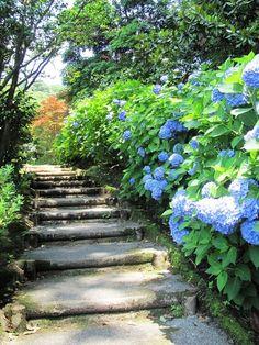 Stunning 32 Beautiful Hydrangea Garden. My Favorite Flower https://gardenmagz.com/32-beautiful-hydrangea-garden-my-favorite-flower/