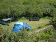 Trellyn Woodland Campsite - secluded camping in Pembrokeshire