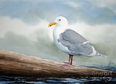 Seagull Painting by James Williamson