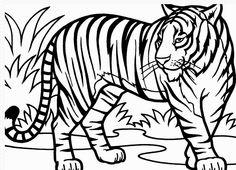 112 Gambar Lions And Tigers terbaik di 2015