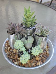 Gardening Love Succulent Garden: love the idea to use cans. now im never throwing out cans or spaghetti sauce jars when im gonna be doing some gardening! :) - Succulent Garden: Succulents in cans for an indoor plate garden Succulent Gardening, Succulent Pots, Gardening Tips, Vegetable Gardening, Plant Pots, Organic Gardening, Succulents In Containers, Cacti And Succulents, Planting Succulents