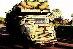 Camion de Yerba - ein Mercedes-Laster voll mit Yerba Mate in Santo Pipó, Misiones, Argentinien.