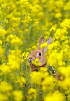 bunny-  it's almost Easter!! I saw one this morning - my lab saw it first!  :)  gosh it's almost sping!!! YEAH!