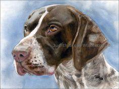 GERMAN SHORT HAIRED Pointer Dog 15 x 11 Giclee Print by k9stein, $40.00