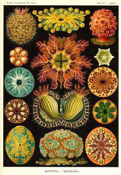 """UrbA // ActU: """"Art Forms of Nature"""", The Ernst Haeckel Collection"""