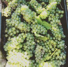 """""""Sitting outside is the best, great view of the vineyard. Great View, Wines, Harvest, Vineyard, Fruit, Vine Yard, Vineyard Vines"""
