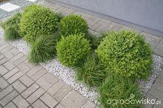 Ogród niby nowoczesny ale... - strona 1144 - Forum ogrodnicze - Ogrodowisko