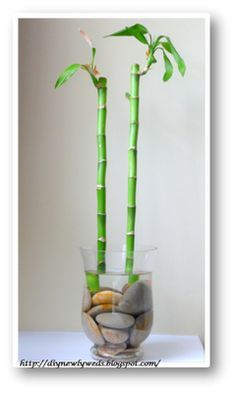 A little bamboo for the bathroom, to continue the mini-spa theme. Need to find a narrow vase that& fit on the ledge by the tub. Spa Inspired Bathroom, Bathroom Spa, Bathroom Ideas, Master Bathroom, Bamboo Planter, Diy Home Decor For Apartments, Mini Spa, Lucky Bamboo, Spa Rooms