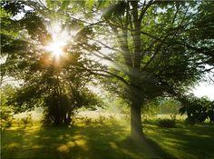 sunlight on tree