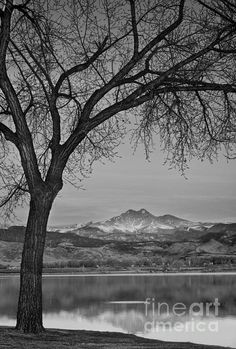 A beautiful early morning colorado sunrise on the lake with fish junmping and a majestic epic view of Longs Peak 14,256. Fine art photography prints, decorative canvas prints, acrylic prints, metal Prints wall art  for sale on FineArtAmerica.com. Prints starting at $25. Copyright: James Bo Insogna