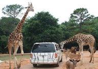 Wild Animal Safari - Drive Through Animal Parks - Pine Mountain, GA