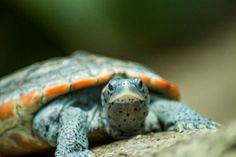 Awesome High School Students Just Got Lawmakers to Save This Dying Turtle Species | TakePart