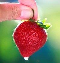 ¿Cómo hacer mermelada de fresas