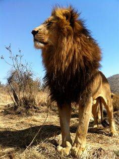 From Kevin Richardson's tweetpics
