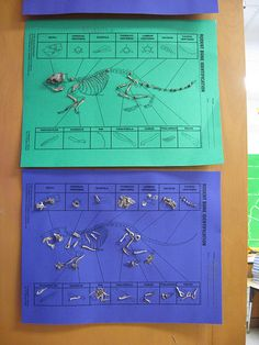 Owl pellets on color paper. (Classroom 11/11/07 13 by Miz H, via Flickr)