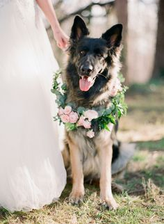 How cute is this dog with a floral garland / collar?! Florals by @Anthomanic photo by @Marta Locklear