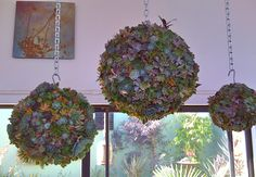 Hanging Succulent garden.  From the blog it looks as if the core is made of moss. I like it!!