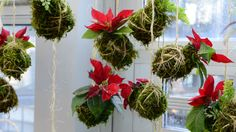 String Gardens are new to Botanica this year! Assorted varieties of ferns, peperomia, and poinsettia. Check back in January for new orchid varieties.