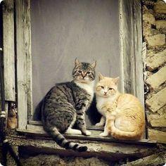 cats summer loves