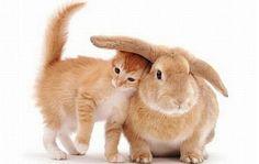 Meow(=^ェ^=)