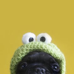 knit frog, eating a pug