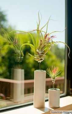 Tillandsia (design by Josh Rosen)