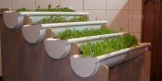 Huertas hidropónicas: Cultivar hortalizas y mas pero SIN TIERRA en tu balcon o en el patio de casa