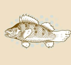 c92cffde Jeremy Fish Fish Art, Elevator, Adult Coloring, Coloring Books, Coloring  Pages