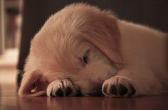 awwww, sleepy puppy