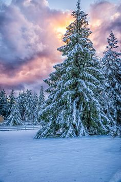 CANADA -- amazing WINTER WONDERLAND - British Columbia - Bryn - Thorcrest Farm #tree snow landscape