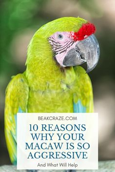 180 Pet Birds Ideas Pet Birds Parrot Parrot Toys