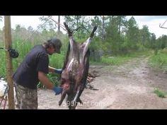 How to Clean a Hog Wild Boar Hunting, Deer Hunting Tips, Hog Hunting, Archery Hunting, Hunting Stuff, Gutting A Deer, Hog Trap, Poultry For Sale, Deer Processing