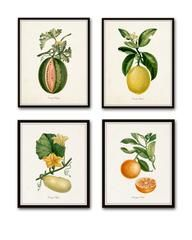 """FLEURS DE JARDIN - """"FLOWERS OF THE GARDEN"""" PRINT SET NO. 5 - GICLEE CANVAS PRINTSThis print features 6 antique botanical illustrations which have been digitally"""