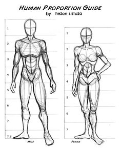 Exceptional Drawing The Human Figure Ideas. Staggering Drawing The Human Figure Ideas. Drawing Body Proportions, Human Body Drawing, Human Anatomy Drawing, Human Figure Drawing, Figure Sketching, Figure Drawing Reference, Art Reference Poses, Guy Drawing, Anatomy Reference