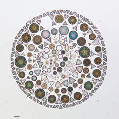 Artistic Arrangements of Microscopic Algae Viewed Through a Microscope - Colossal