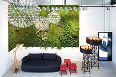 grow plants indoors - Google Search